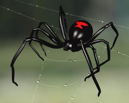 spider bites photos #11