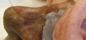 Bild Nase aus 3D-Drucker dunkler Hauttyp