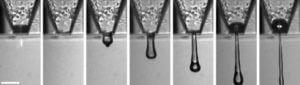 Nahaufnahme beim 3D-Druck von Netzhautzellen