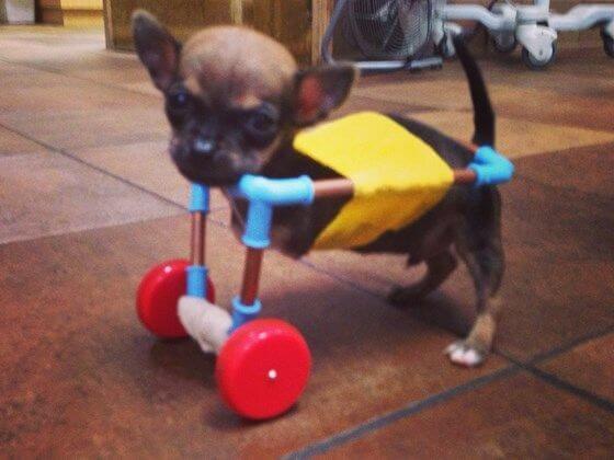 Hund mit Hunderollstuhl aus dem 3D-Drucker