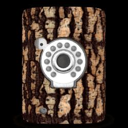 Kiwatch Baum