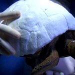 3D-Druckpanzer Schildkröte