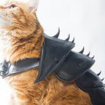Rüstung für Katzen