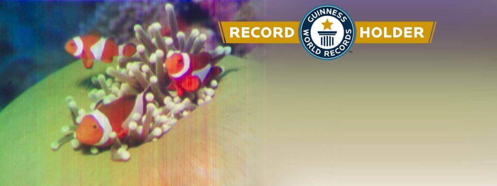 Das kleinste Inkjet-Farbbild der Welt