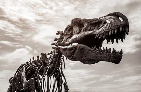Schädel des Tyrannosaurus-Rex wird gedruckt