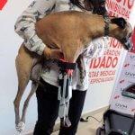Hund Romina mit Beinprothese aus dem 3D-Drucker