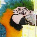 Papagei mit Schnabel-Implantat aus Titan aus dem 3D-Drucker