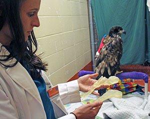 Tierärzte retten Adler mit Knochen aus einem 3D-Drucker das Leben
