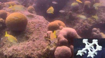 Korallenriff Bonaire