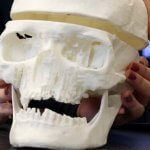 Schädel aus 3D-Drucker