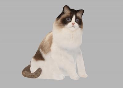 Modell einer Katze
