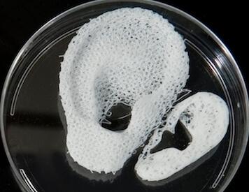 3D-gedruckte Organe