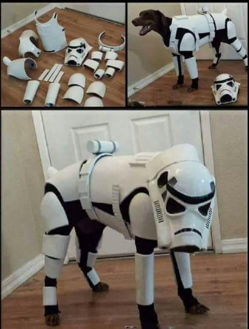 Hund im Star Wars Kostüm