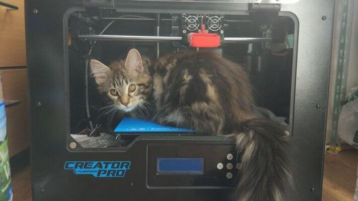Katze aus dem 3D-Drucke