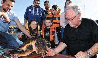 Schildkröte ohne Flosse