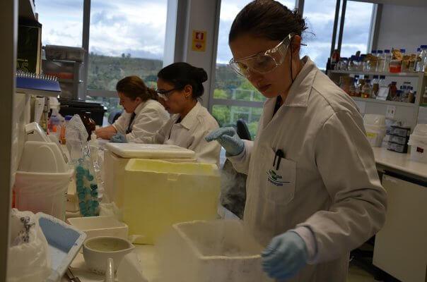 Embrapa Forscher bei ihren Studien