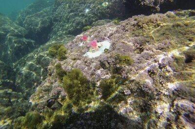 Künstliche Algen