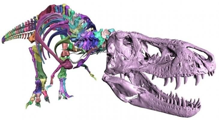 Gescanntes T-Rex-Skelett.