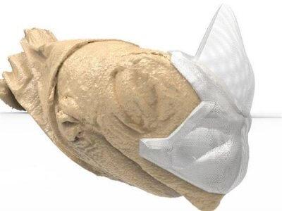 Ein Nashornhorn für Patches
