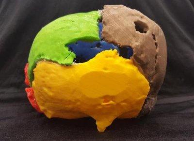 Hinteransicht des 3D-gedruckten Schädels von Gorm der Alte.