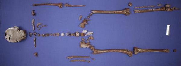 3D-rekonstruiertes Skelett Gorms des Alten