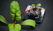 Pflanze aus dem System