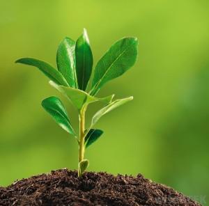Sensoren führen zu besseren Pflanzen