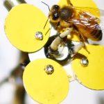 Blume aus dem 3D-Drucker mit Biene