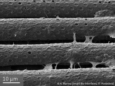 Blut-Hirn-Barriere bestehend aus 3D-gedruckten polymeren Röhrenstrukturen