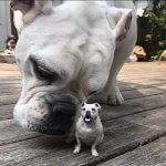 Hund aus dem 3D-Drucker