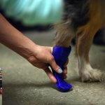 Fußprothese für Hund aus dem 3D-Drucker