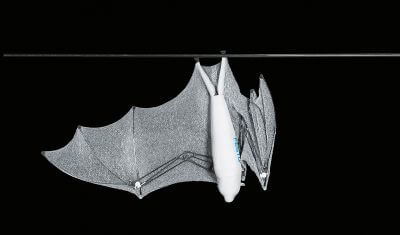 Byonic Flying Fox