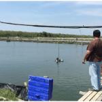 Fischzüchter vor dem Fischteich