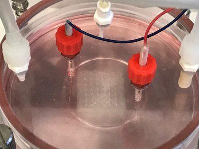 Biotinte Lagerung