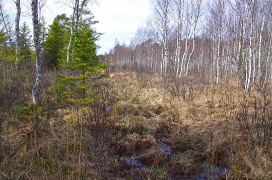 Sumpfgebiet in Estland