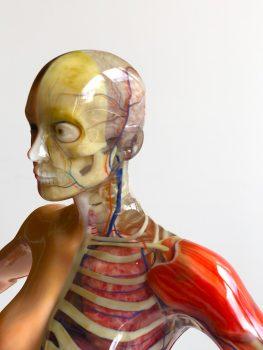 realistisches Modell eines Oberkörpers und Kopfes