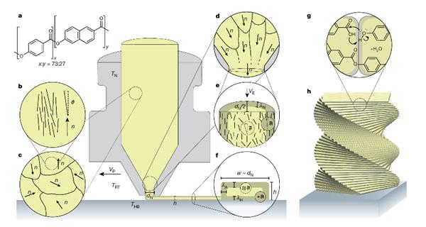 Darstellung von 3D-Druck hierarchischer, thermotroper LCPs mit Fused Deposition Modeling