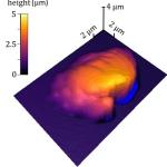 Bild zur Messung der Polymerverarbeitung