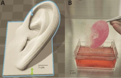 Ohr aus dem 3D-Drucker