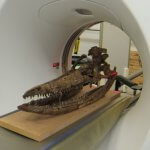 Skelett im CT-Scanner