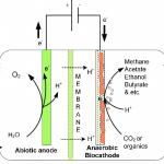 Schema des Bioreaktors aus dem 3D-Drucker