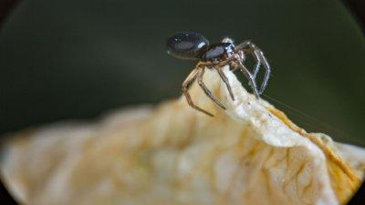 Makrofotografie einer Spinne