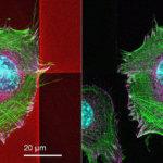 biokompatible Zellgerüste