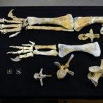Knochen am NHM in Wien
