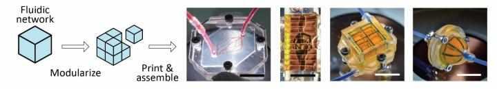 2D- und 3D-Fluidnetzwerke