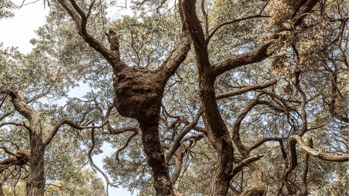 3D-gedrucktes Nest in den Bäumen