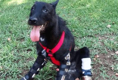 Hund mit Prothese