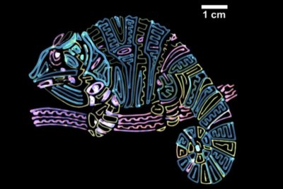 Bild eines Chamäleons