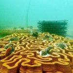 3D-gedruckte Tonfliesen im Wasser