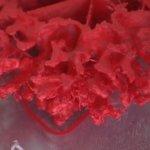 3D-gedrucktes Korallenriff